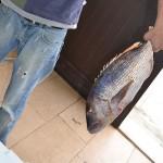 13_pesce_fresco_pescheria