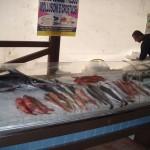 15_pesce_fresco_pescheria