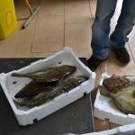 17_pesce_fresco_pescheria