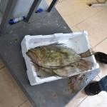 18_pesce_fresco_pescheria