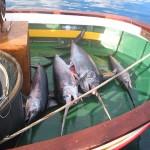1_pesca_isola_d'elba (25)