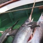 1_pesca_isola_d'elba (26)