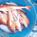 1_pesca_isola_d'elba (45)
