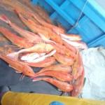 1_pesca_isola_d'elba (47)