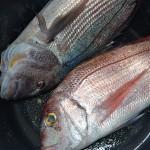 4_pesce_fresco_pescheria